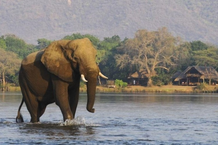 Zambie River Club Bar des Elephants près des Chutes Victoria