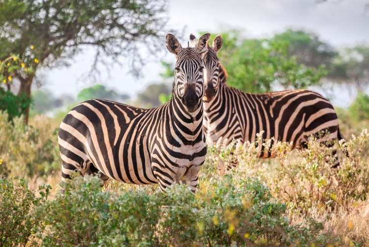 voyage sur mesure Kenya