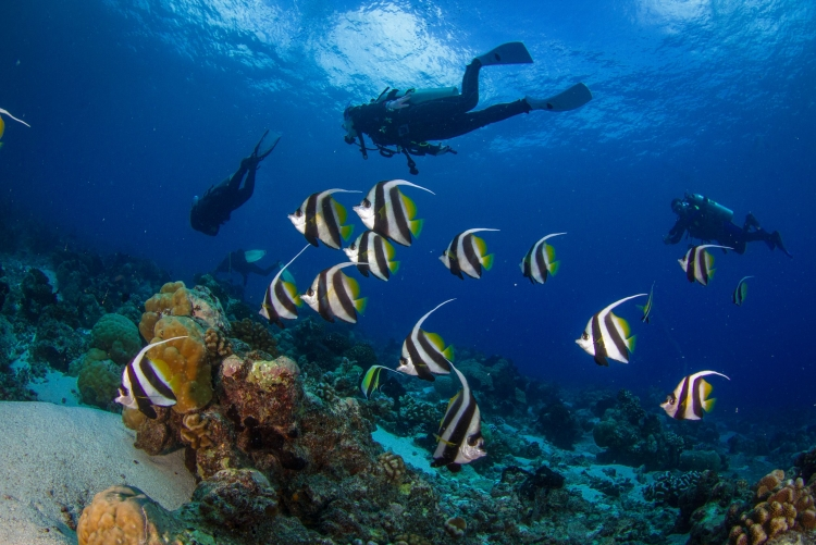 Voyage plongée Tanzanie