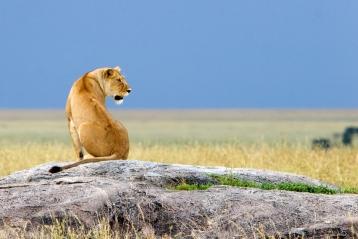 Safari en Tanzanie conseil pour voyage authentique