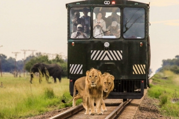 Safari en train Elephant Express Zimbabwe Hwange