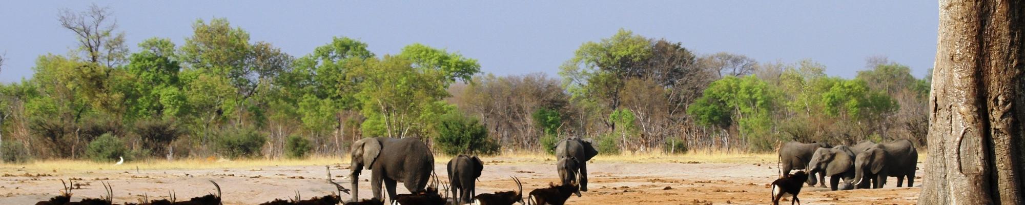 Safari Hwange Zimbabwe