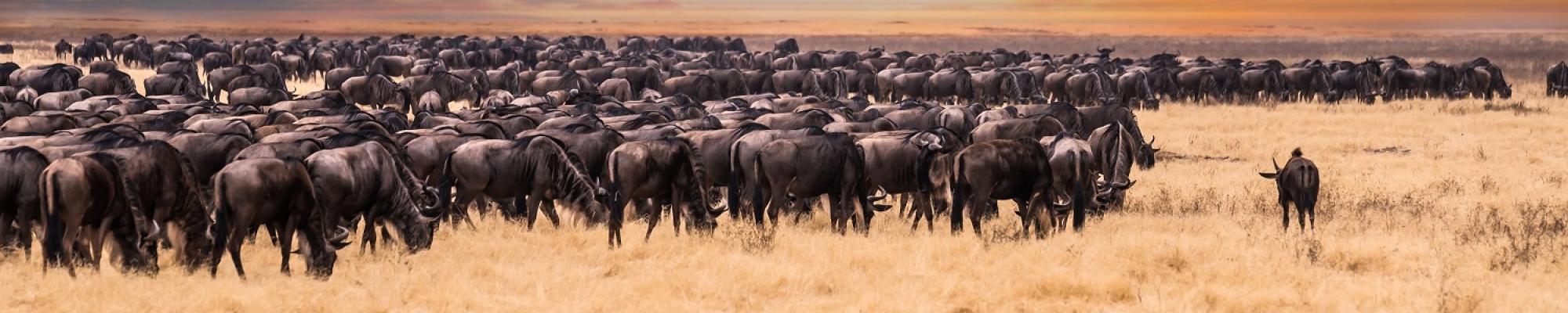 Voyage Tanzanie Safari Serengeti