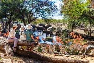 Safari famille en Afrique