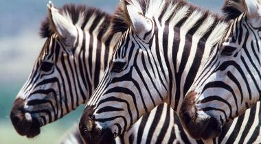 Safaris nature